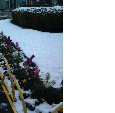雪景色.JPG